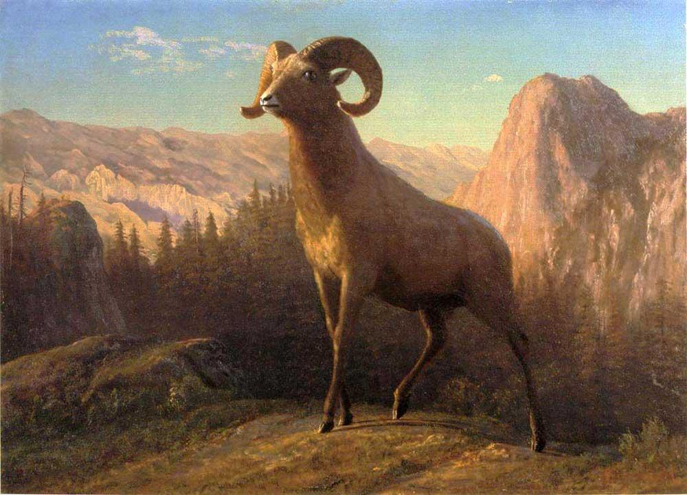 Albert Bierstadt Rocky Dağı Koçu