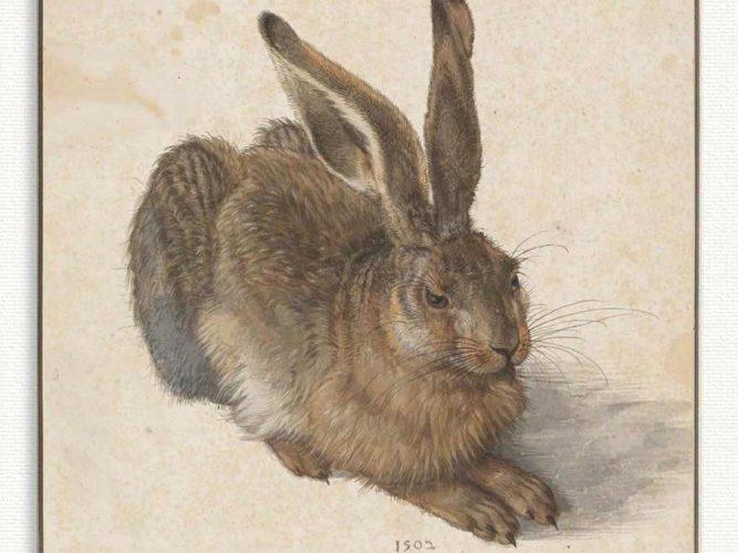 Albrecht Dürer Tavşan tablosu