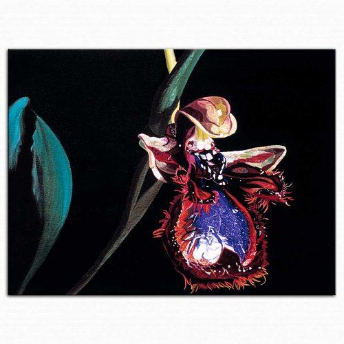 Dagmar Göğdün Böcek Orkidesi