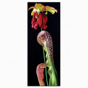 Dagmar Göğdün Flora 06