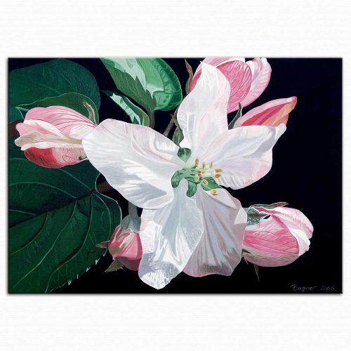 Dagmar Göğdün Flora 08