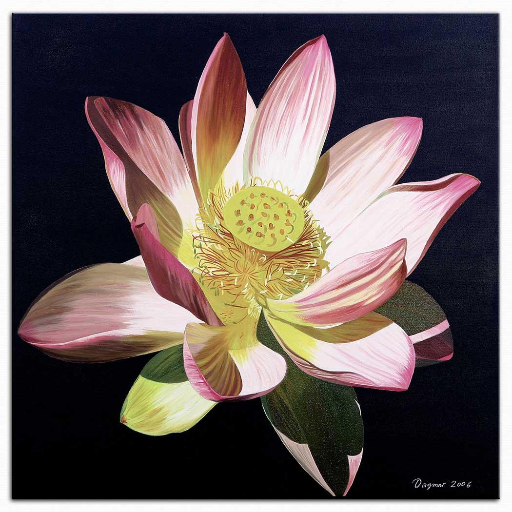 Dagmar Göğdün Hint Lotusu Sacred Lotus