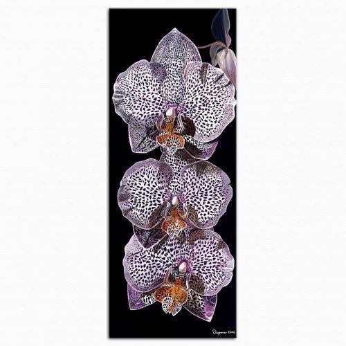 Dagmar Göğdün Leopar Orkidesi