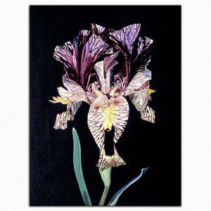 Dagmar Göğdün Nevruz Çiçeği