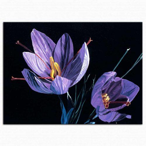 Dagmar Göğdün Safran Çiçeği
