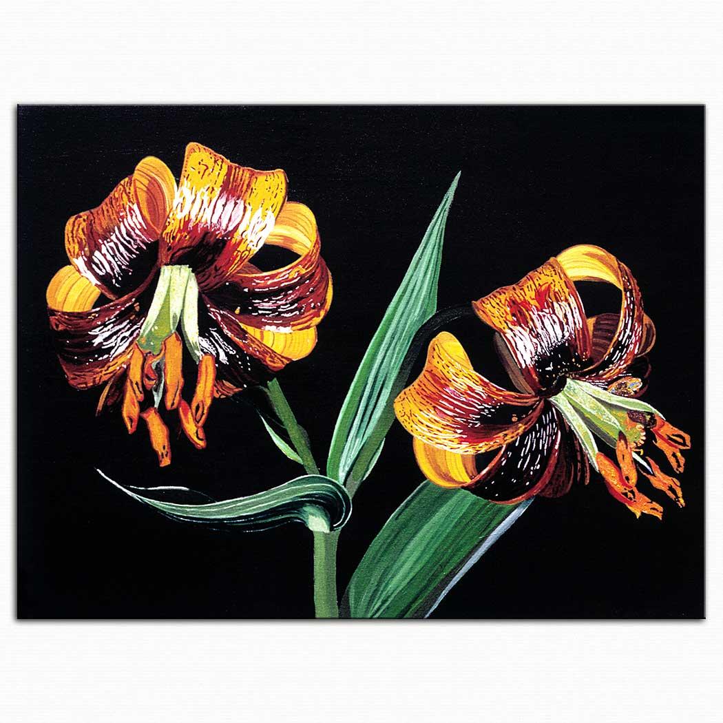 Dagmar Göğdün Zambak iris