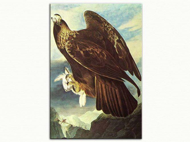 John James Audubon Avcı Kartal