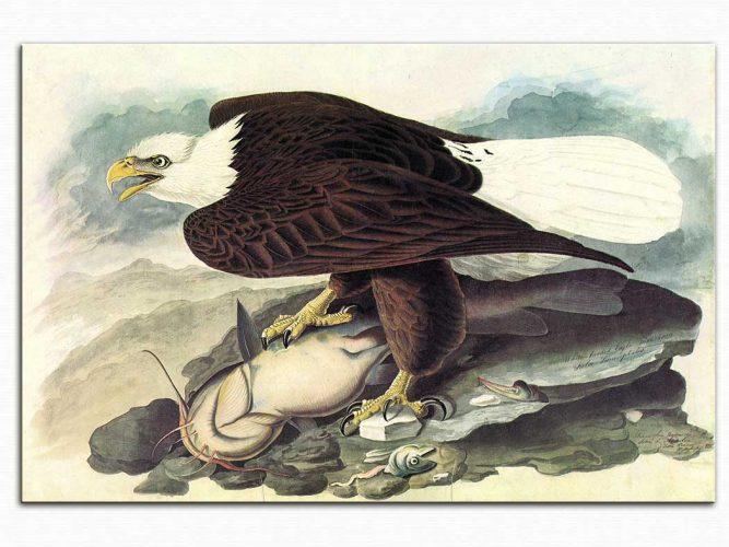 John James Audubon Kartal