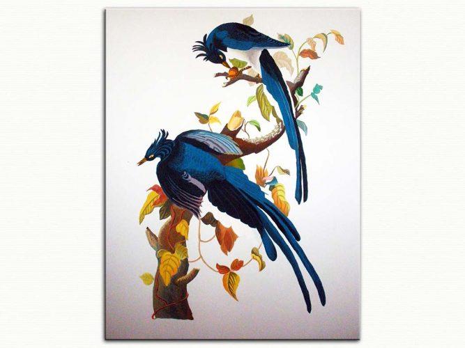 John James Audubon Mavi Saka