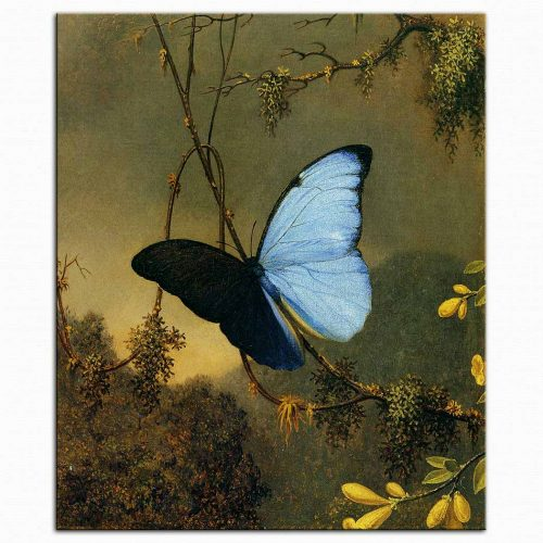 Martin Johnson Heade Mavi Kelebek