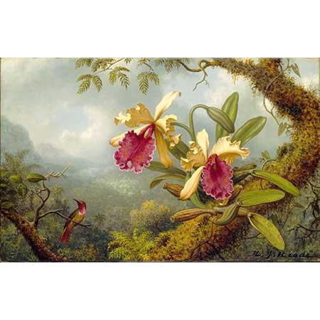 Martin Johnson Heade Orkideler ve Kalibri
