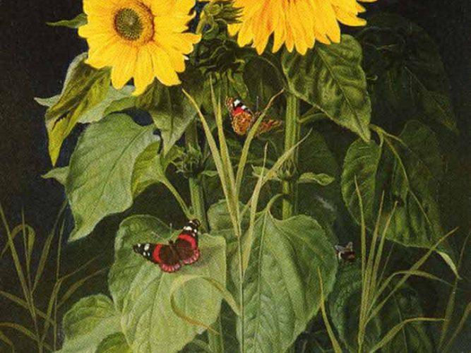 Niels Fristrup Ayçiçekleri tablosu