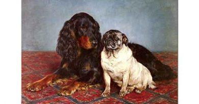 Otto Bache Spanyel ve Pug