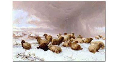 Thomas Sidney Cooper Karda Koyunlar