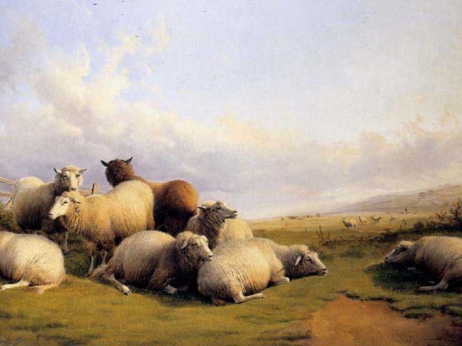 Thomas Sidney Cooper Mezrada Koyunlar