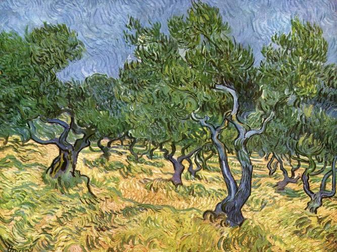 Vincent Willem van Gogh Zeytinlik tablosu