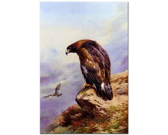 Archibald Thorburn Altın Kartal