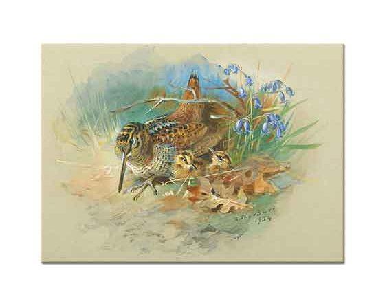 Archibald Thorburn Çulluk ve Yavrusu
