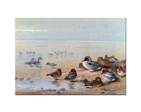 Archibald Thorburn Deniz Kenarında Ördekler