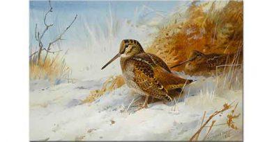 Archibald Thorburn Kış Çulluğu