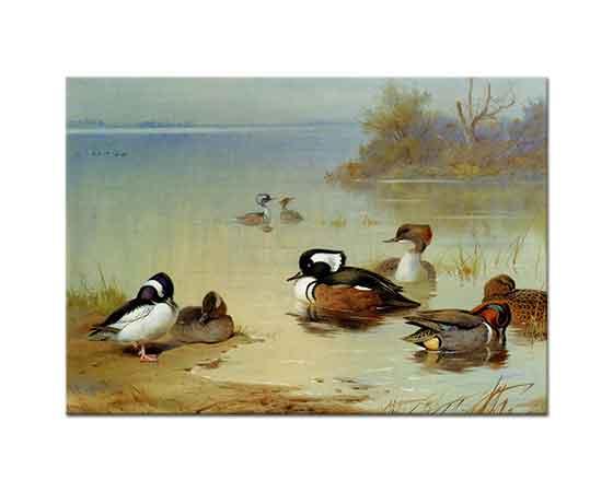 Archibald Thorburn Ördekler