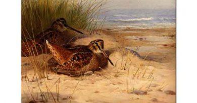 Archibald Thorburn Sahilde Kuluçkaya Yatan Çulluk