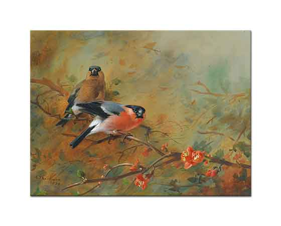Archibald Thorburn Şakrakkuşu ve Japon Pyrusu