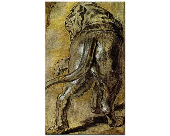 Peter Paul Rubens Aslan Eskizi