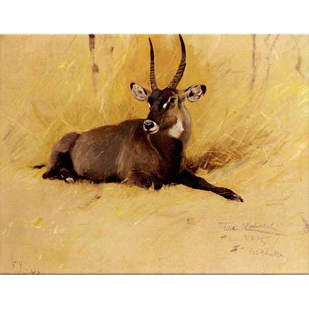 Friedrich Wilhelm Kuhnert Afrika Antilopu