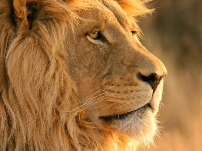 Kral Duruşu