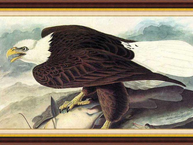 John James Audubon hayatı ve eserleri