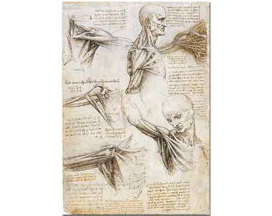 Leonardo Da Vinci Anatomi Çalışmaları