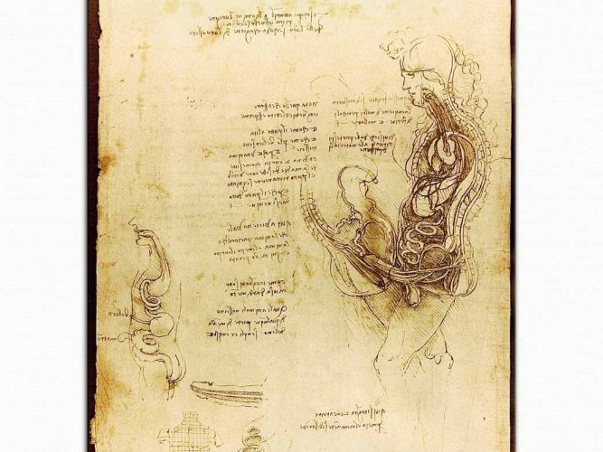 Leonardo Da Vinci Anatomi Eskizleri