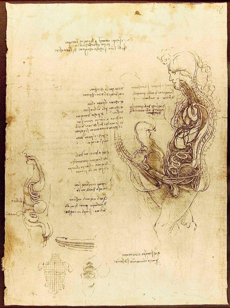 Leonardo Da Vinci Anatomi Eskizleri ( Cinsel Organ )