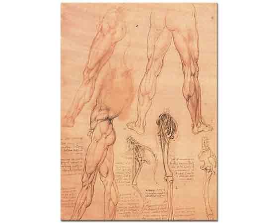 Leonardo Da Vinci Anatomi Etüdleri insan ve at Bacakları