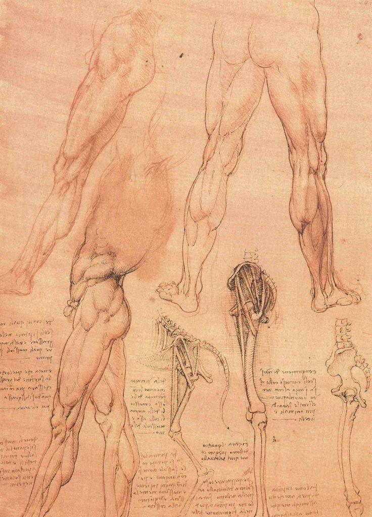 Leonardo Da Vinci Anatomi Etüdleri insan ve at