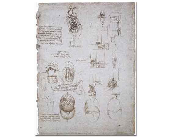 Leonardo Da Vinci Anatomi ve Mimari Çalışmaları
