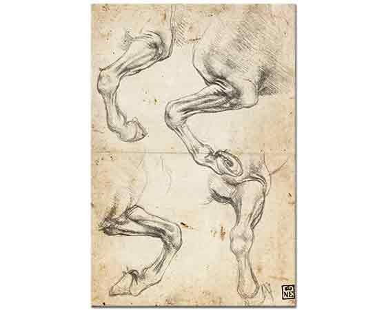 Leonardo Da Vinci At Eklemleri Etüdleri