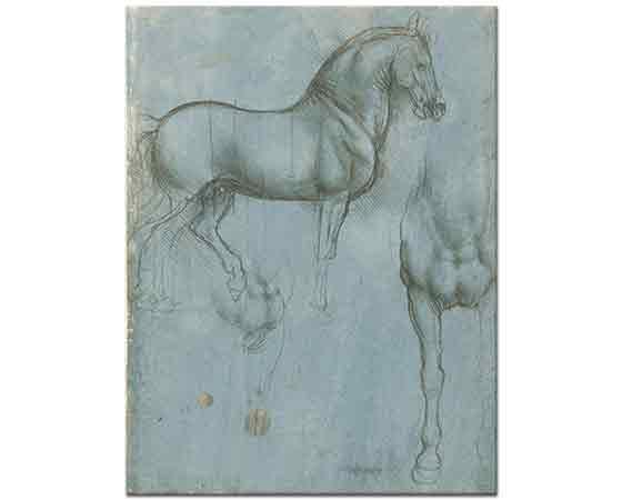 Leonardo Da Vinci At Eskizleri Detay
