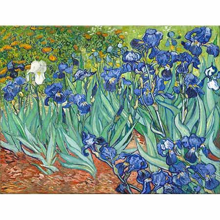Vincent van Gogh Tarlada Süsenler