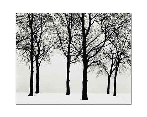 Henri Cartier Bresson Karda Ağaçlar