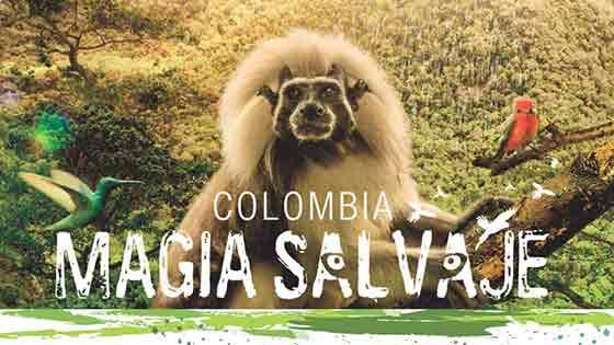 Kolombiya Vahşi Büyü Colombia Magia Salvaje