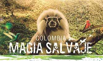 Kolombiya Vahşi Büyü Filmi
