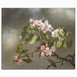 Martin Johnson Heade, Elma çiçekleri, 1875
