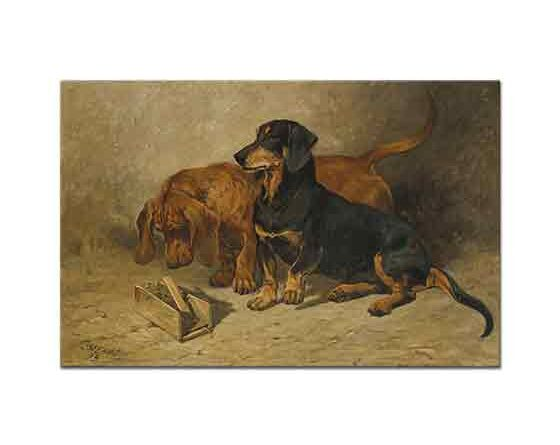 John Emms Dachsund Cinsi Köpekler