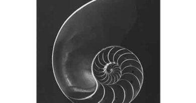 Andreas Feininger Nautilus Pompilius